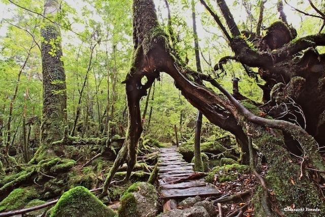 まるで生きる森!精霊宿る「屋久島の木々」がすごい