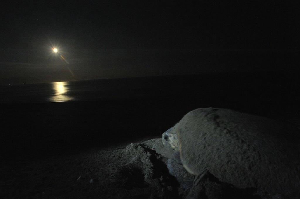 【かめカメラ】ウミガメ写真家が綴る、感動のウミガメの旅 ー第1回