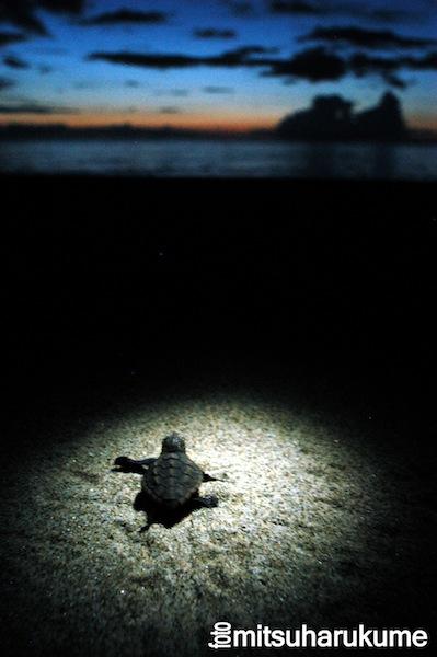 【かめカメラ】ウミガメ写真家が綴る、感動のウミガメの旅 ー第2回