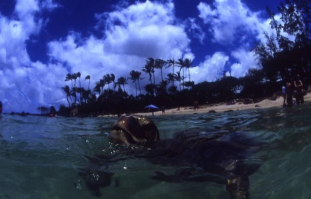 【かめカメラ】ウミガメ写真家が綴る、ウミガメの旅コラム ー第3回