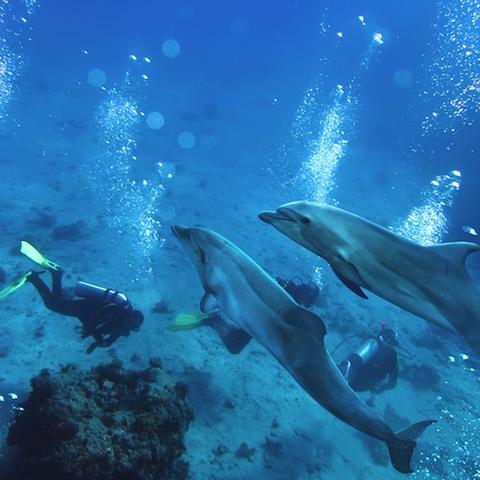 未知なる癒やし体験、ハワイ島でイルカと泳ぐ!