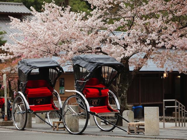 訪日旅行者数、1000万人超え!京都の外国化進む?