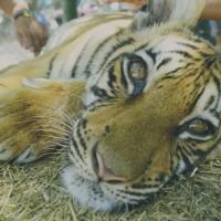旅の基本は自己責任!「世界一危険な動物園」