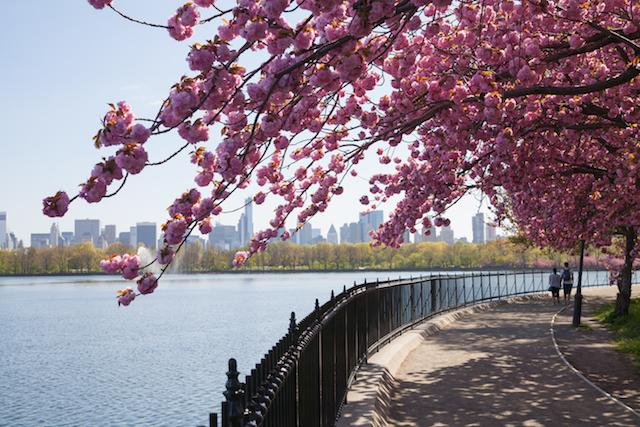 春よ来い!セントラル・パークでやりたいことベスト5