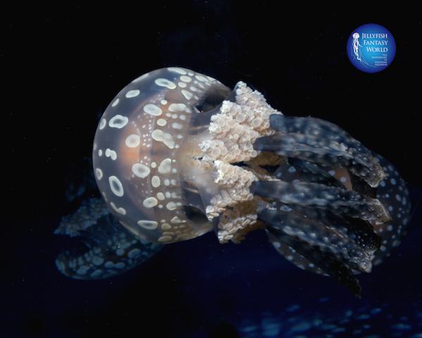 浮遊するクラゲに癒される、5つの水族館