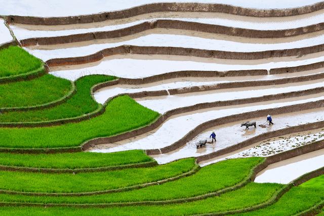 言葉を失うほど美しい、四季折々の「ベトナム棚田絶景」