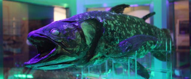 【生きた化石】不気味美しい、世界の「古代魚」に出会える水族館5つ