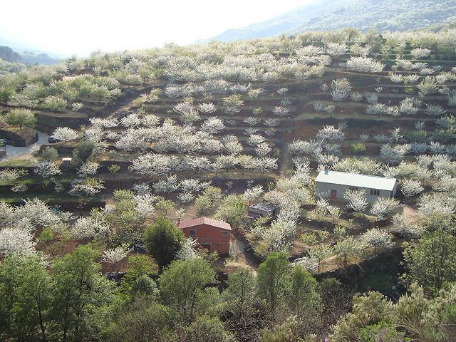 桜で染まるスペインの「白い谷」