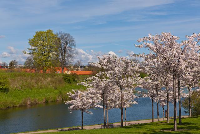 どこが一番きれいなの?世界の桜スポット比較