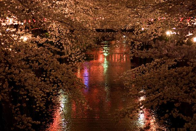 妖艶な美しさに息をのむ。シチュエーション別「夜桜」のすすめ