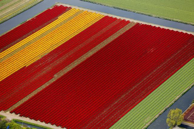 【オランダ】カラフルな花絨毯が広がる「チューリップの絶景」