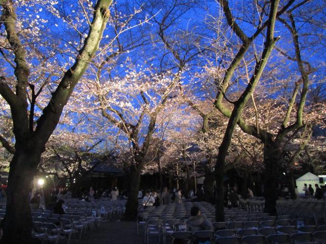 【都内】会社帰りに癒しの夜桜。ひとりで気軽に立ち寄れる、夜桜スポット