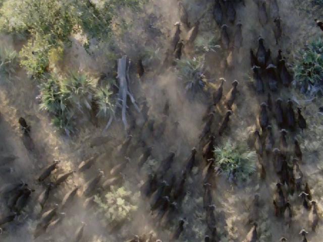 【6300円で行ける世界旅行】迫力の自然映像とフルオーケストラがコラボ!