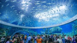 ギネス記録を更新!中国に誕生した規格外な「世界最大の水族館」