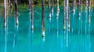 【北海道】世界に認められた幻想的な「青い池」