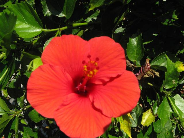 【日本発見】東洋のガラパゴス、小笠原諸島で大自然を満喫