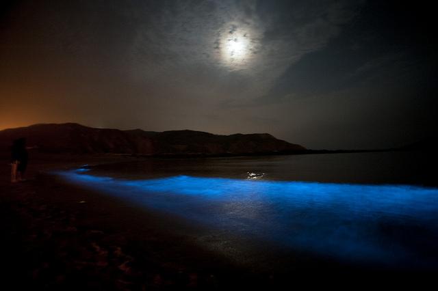 海の中にも天の川!?世界の夜光生物が作り出す絶景
