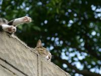 【広島】猫がゴロンと昼寝をする丘。尾道のんびり癒される街並み