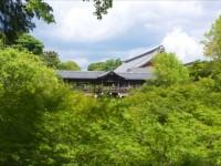 夏にしか出会えない京都・紅葉で有名な東福寺は、青もみじも見事!