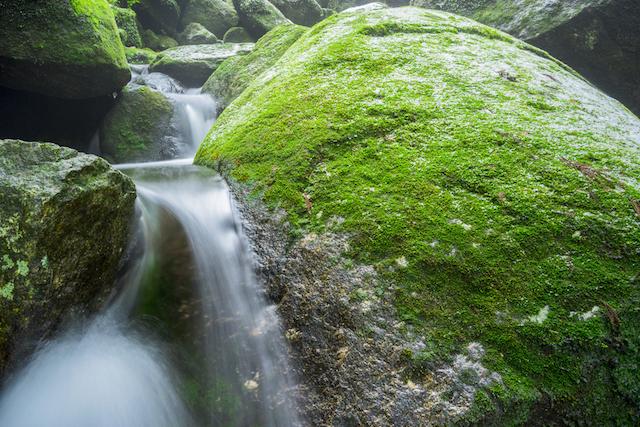 【世界遺産】屋久島の主「縄文杉」に会いに行く旅