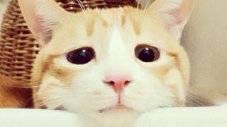 愛らしい姿に癒される。心に残る個性派!猫本
