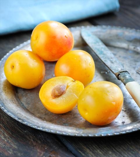 食べてみたい! フランス初秋の味「ミラベル」を知っていますか?