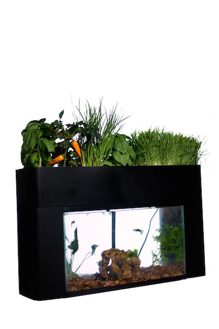 これぞ究極の「エコ」! 野菜を育てちゃう水槽が海外で話題に