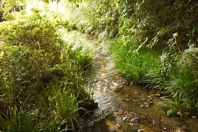 【現地レポート】湧水に白鳥・・・武蔵野に残る、知られざる森