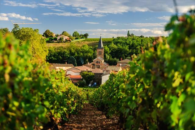 【フランス】ワイン博物館にワイン祭り、ブルゴーニュのワイン街道