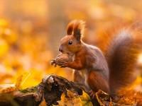 ちょっぴり切ない秋を象徴する動物達の姿