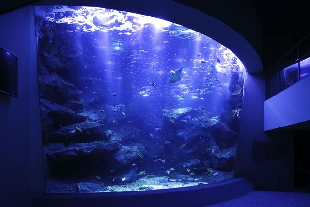 幻想的な水の世界、東京スカイアクアリウム(11/22~1/12開催)