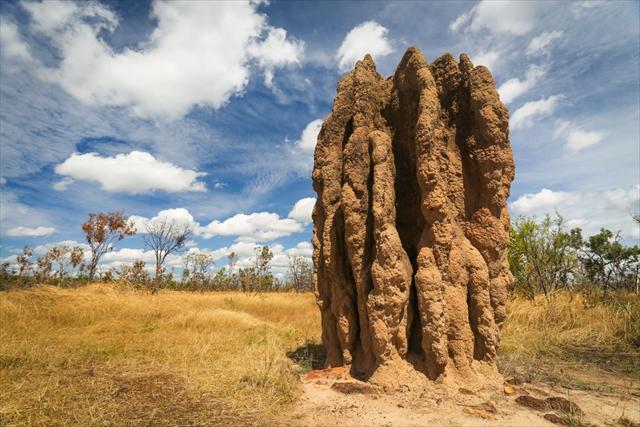 不思議絶景!?世界の巨大蟻塚が面白すぎる