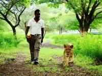 モーリシャスでは、ホワイトライオンと一緒にお散歩できる!?