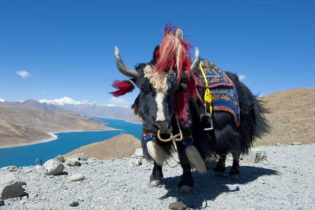 東洋最後の秘境!一生に一度は行きたいブータンの旅