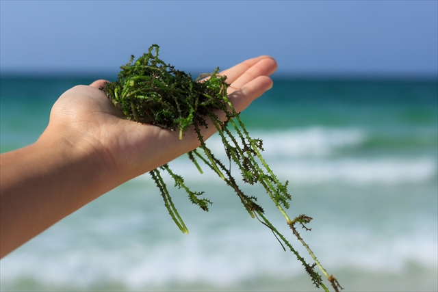 日本の匂いって?世界各国の'香り'が体験できる地球儀が画期的!