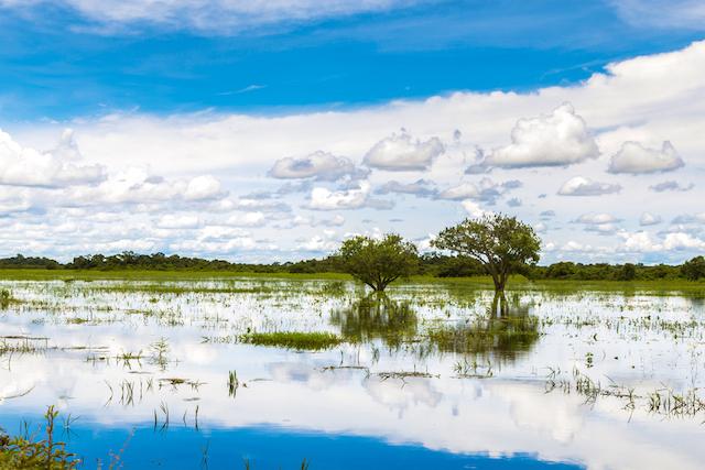 【世界遺産】地球に残された生命の楽園、南米に広がる大湿原「パンタナール」