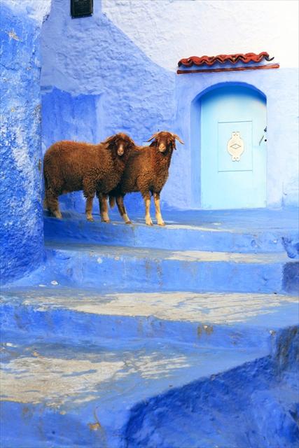 HAPPY NEW YEAR! 羊とめぐる世界の絶景へ