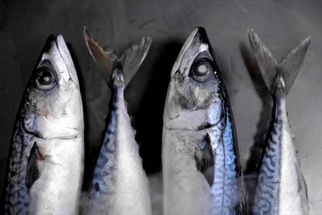 【男の台所】お酒のあてに!今が旬「しめ鯖」の作り方