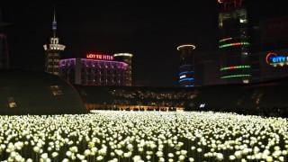 【東大門】LEDライトで輝く白いバラ・・都会のお花畑を散歩してみた