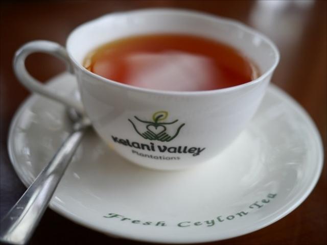紅茶の本場で最高のセイロンティーを飲む夢を叶えにいってきた
