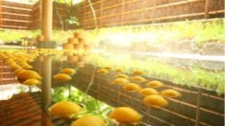長野に行くなら善光寺御開帳中の今!期間限定レモン風呂でさっぱりと