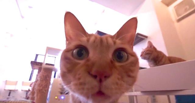 【恵比寿】これぞジャパニーズスタイル!癒しを求めて「猫カフェ」へ