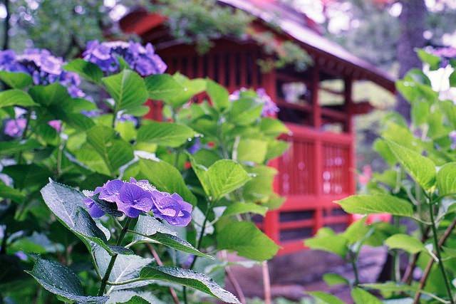 【都内】雨の日だから出掛けたい、紫陽花の名所3選