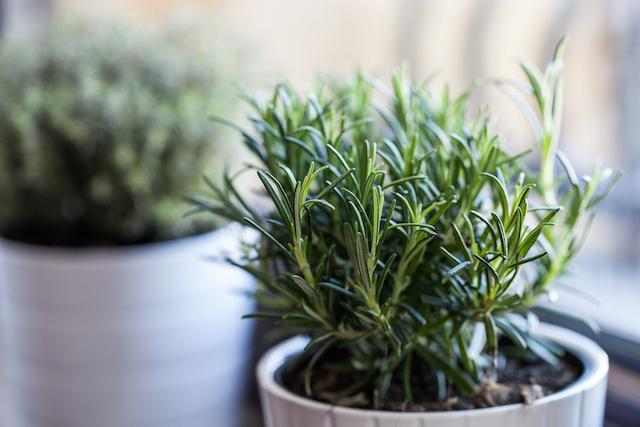 置くだけで虫除けにも!?この夏お庭やベランダに植えたいハーブ4選