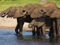 【アフリカ】シンクロ率100%?!水浴びを楽しむゾウ達がおもしろ可愛い