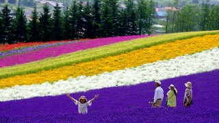 【富良野】丘に虹を描く、ラベンダーのある風景