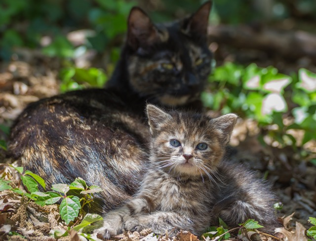 【NYストリートキャット】猫可愛がりの子育て