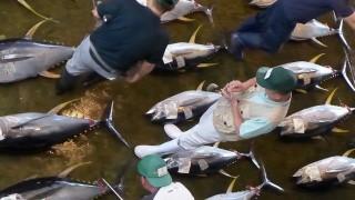 【和歌山】勝浦漁港でマグロの競り見学!漁港前の朝市で朝ごはんも食べれる