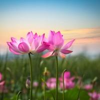 ありがたいお姿に思わず合掌。夏に咲く蓮の魅力とは?