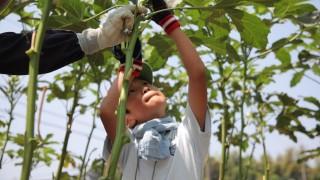 【武蔵小杉】大人も子どもも楽しめる「COSUGIワークショップ」の魅力